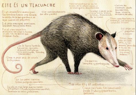 """""""El Tlacuache"""". Publicado por Juan Palomino"""